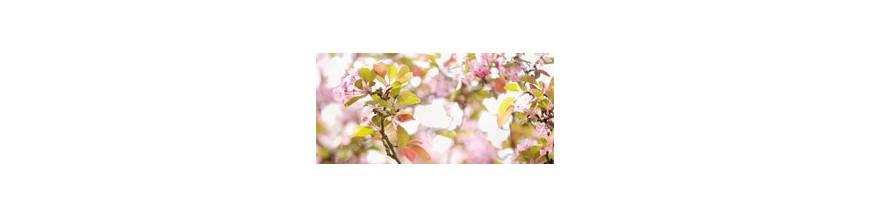 Rêves de Fleurs
